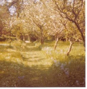 A film photograph of an orchard.
